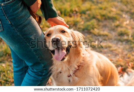 Closeup side view smilling portrait of Golden retriever dog in summer background. Smiling woman hugging her pet golden retriever dog with hand Royalty-Free Stock Photo #1711072420
