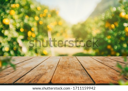 Empty wood table with free space over orange trees, orange field background. For product display montage #1711159942