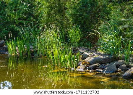 Magical garden pond with evergreens along stone shores. Aquatic plants growing on shore are reflected in mirror surface of pond. Atmosphere of relaxation, tranquility and happiness #1711192702