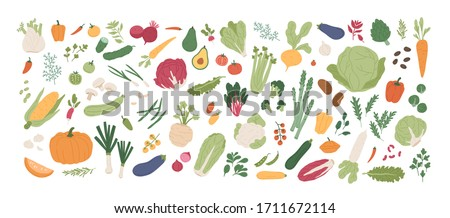 Collection of various vegetables isolated on white background. Bundle of organic natural crops, salads, greens and herbs. Colorful vector illustration in flat cartoon style #1711672114