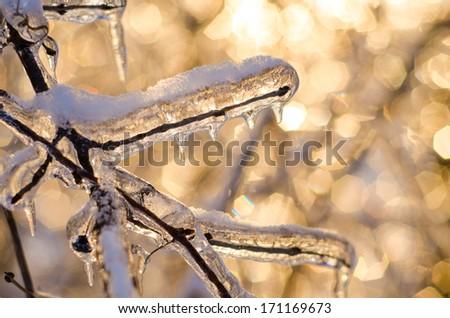 Beautiful sparkling Winter scene #171169673