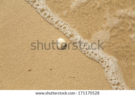 White sea shell and wave on sandy beach with copyspace  #171170528