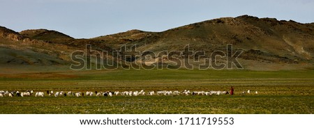 Sheep and goats on a pasture in Mongolia. Panorama of the pasture. Source of meat, milk and wool. Goat cashmere and cheese are a favorite souvenir of tourists. #1711719553