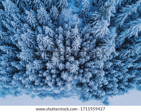 Aerial top view to snowy moutain trees of winter pines. Middle of the winter. High needles in the forest. Beautiful nature landscape from drone.
