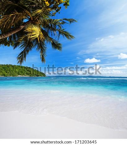 Tropical Heaven #171203645