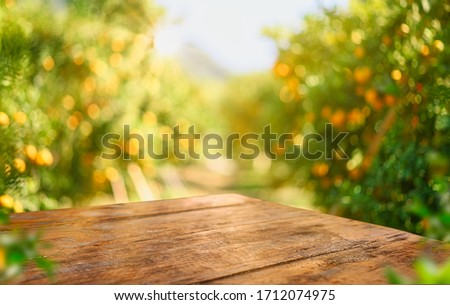Empty wood table with free space over orange trees, orange field background. For product display montage #1712074975