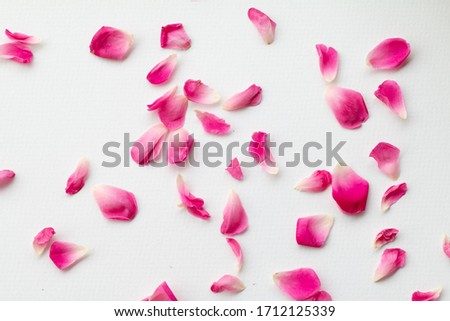 Close up image of pink roses on black background. #1712125339
