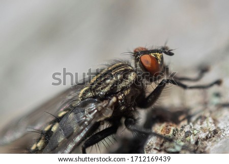 Fly close-up. Macro picture of an insect.Fly portrait