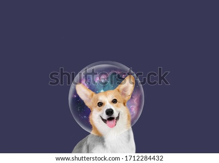 Cute Welsh Corgi. Happy dog. Beautiful picture of Welsh Corgi