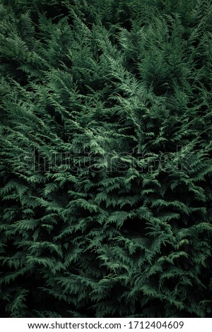 Dense emerald green foliage from somewhere in Ireland. #1712404609
