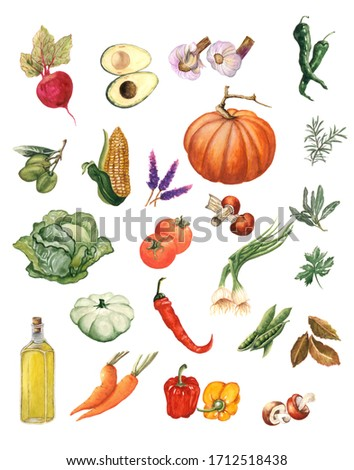 Watercolor vegetables clip art. Hand Drawn Kitchen elements. Illustration of vegetables suitable for textiles and menus.