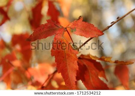 Autumn trees yellow maple leaves #1712534212