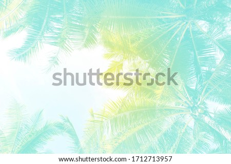 Abstract Summer concept background, Coconut tree background with vintage filter, summer holiday background