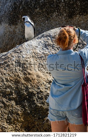 A woman, back view, take pictures from african penguin on a rock at Boulders Beach, Simonstown , South Africa