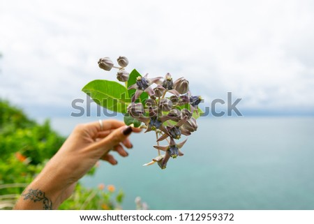 Hand hold flowers with ocean view     #1712959372