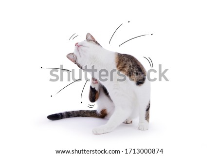 funny cat scratching with cartoons of ballerina jumping fleas on isolated studio background
