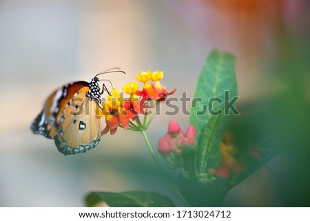 Beautiful picture of butterfly on the flower.