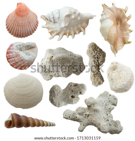 shells and corals on a white background with a slight blur top view
