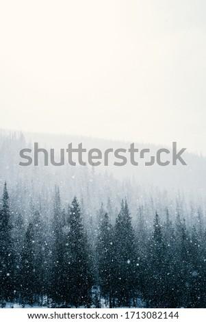 Snow in Rocky Mountain National Park, Colorado #1713082144