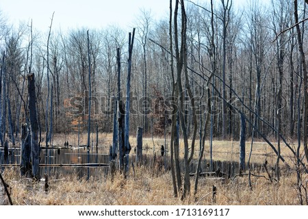 Michigan swamps include conifer swamps, hardwood swamps, mixed conifer-hardwood swamp and shrub swamp.