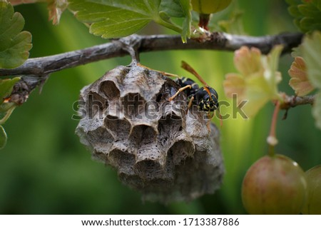 This is a picture of a bee hive.