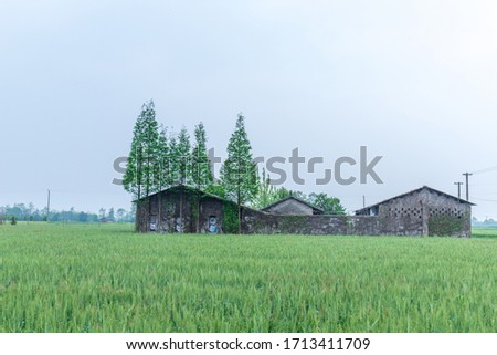 Green wheat fields and houses #1713411709