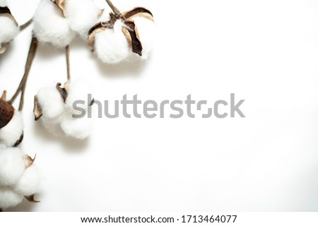 Raw fluffy cotton buds on white background and recycled timber #1713464077