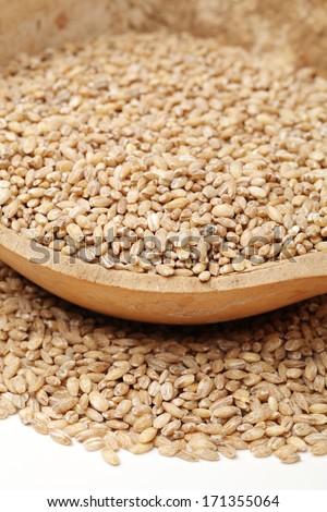 Pearl barley on a white background  #171355064