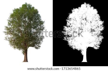 Isolated single tree on white background with clipping path and alpha channel  #1713654865