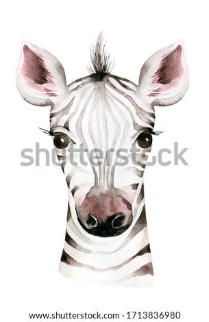 Africa watercolor savanna zebra animal. African Safari cute animals portrait character.Perfect for wallpaper print, packaging ,invitations, wedding design