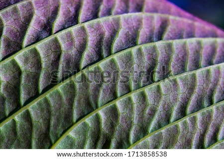 Abstract floral background. The texture of green leaves close-up. Green leaf. Macro photo. Stripes on a green leaf close-up. Shades of color on a green leaf. #1713858538