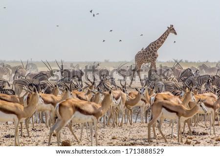 large group of animals in a waterhole in Ozonjuitji m'Bari, Etosha National Park, Namibia. Royalty-Free Stock Photo #1713888529