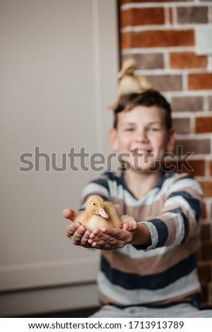 Handsome cute boy playing with little ducks inside stylish decorated house. Tender pictures of a child with ducklings on a brick wall background