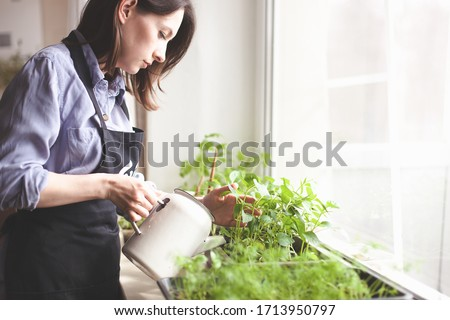 gardening home. woman replanting green pasture in home garden.indoor garden,room with plants banner Potted green plants at home, home jungle,Garden room,gardening, Plant room, Floral decor. #1713950797