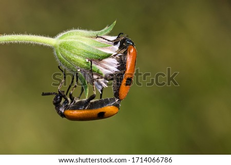 Macro Close up picture of beetle on natural green background