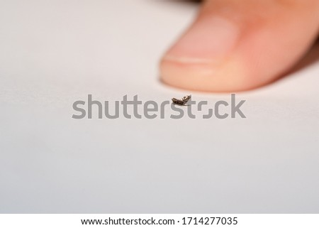 Louse or lice macro finger on white paper background, louse bite head kids, lice is vector of diseases is typhus, chewing lice live among the hairs of children, louse in parasite sucking blood child