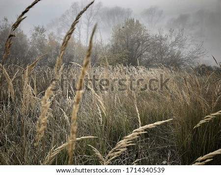 field of gold with fog in the forest #1714340539