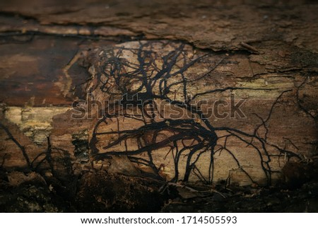 wood texture with a beautiful dark pattern on the surface