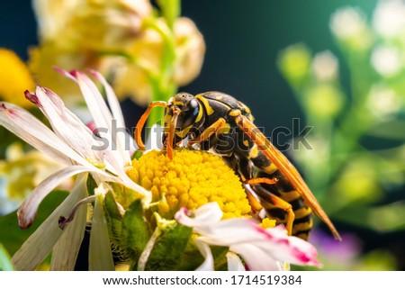 The picture shows Hornet (Vespa crabro) isolated on colorful background. Mega macro shot. Extreme close-up.