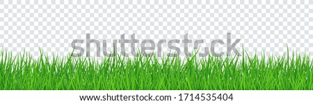 Green Grass Isolated Transparent background Royalty-Free Stock Photo #1714535404