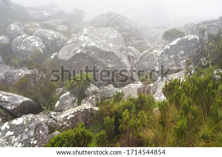 Grass and small green bushes grow over large rocks, fog rolls over -typical scene seen during trek to Pic Boby peak in Andringitra, Madagascar