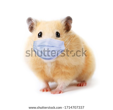 Little funny hamster in medical mask isolated on white background #1714707337