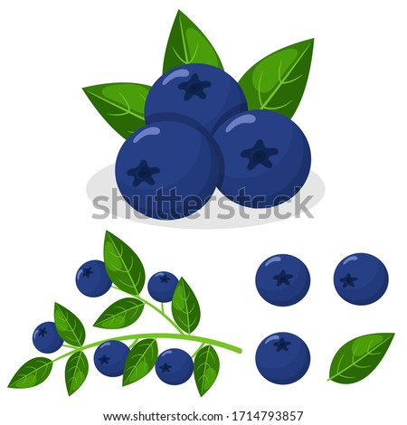 Set of fresh bright exotic blueberries isolated on white background. Summer fruits for healthy lifestyle. Organic fruit. Cartoon style. Vector illustration for any design. #1714793857