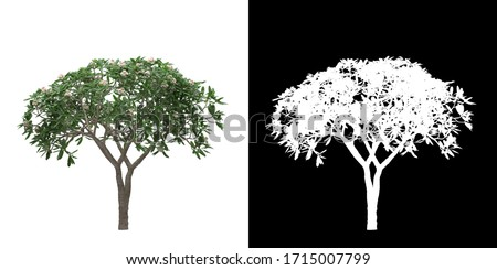 Front view (Plumeria Obtusa) png with alpha cutout 3D rendering #1715007799