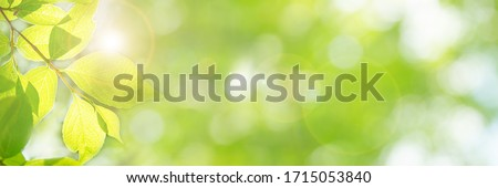 Image of fresh green season (yellow-green leaves that have sprouted newly), bright future, new start, happiness, etc. Royalty-Free Stock Photo #1715053840