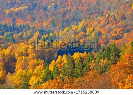 Breathtaking panoramic aerial view of the hills of colorful red, orange and yellow trees in a mixed coniferous forest in a morning haze. Fairy autumn landscape. Gauja national park, Sigulda, Latvia