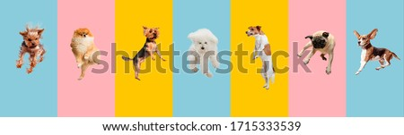 Young dogs jumping, playing, flying. Cute doggies or pets are looking happy isolated on colorful or gradient background. Studio. Creative collage of different breeds of dogs. Flyer for your ad. #1715333539