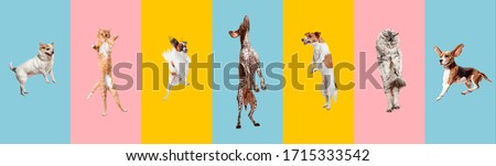 Young dogs jumping, playing, flying. Cute doggies or pets are looking happy isolated on colorful or gradient background. Studio. Creative collage of different breeds of dogs. Flyer for your ad. Royalty-Free Stock Photo #1715333542