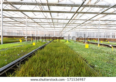 cultivation of plants in a greenhouse  #171536987