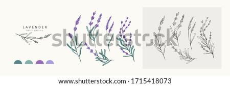 Lavender logo and branch. Hand drawn wedding herb, plant and monogram with elegant leaves for invitation save the date card design. Botanical rustic trendy greenery vector illustration #1715418073
